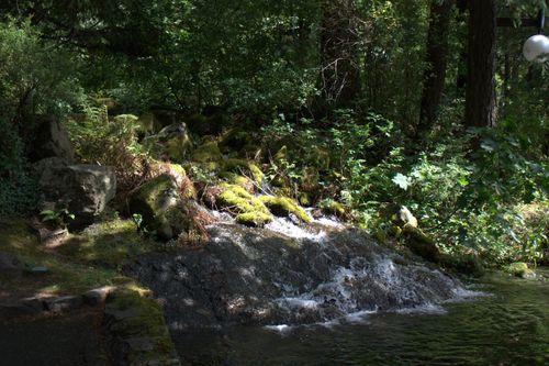 Cascade locks moss rocks